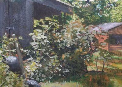 My overgrown back yard in gouache